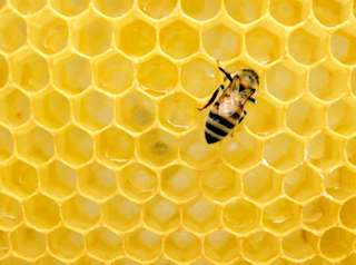 La ruche est composée d'alvéoles.