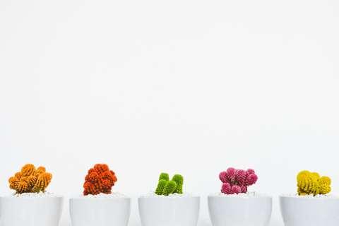 Les plantes sont parfaites pour donner vie à votre intérieur.